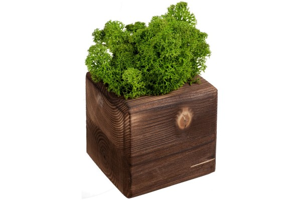 Декоративная композиция GreenBox Fire Cube, зеленый