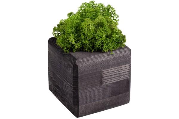 Декоративная композиция GreenBox Black Cube, зеленый