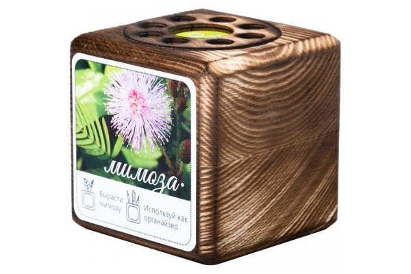 Набор для выращивания с органайзером «Экокуб Burn», мимоза